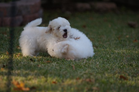 © 2014 REMCooks.com - Puppies at play